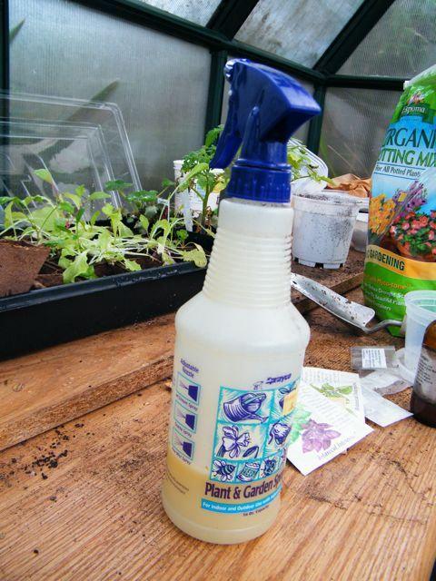 How to make your own all natural pesticide pinterest gardens home and homemade - Homemade organic pesticides ...