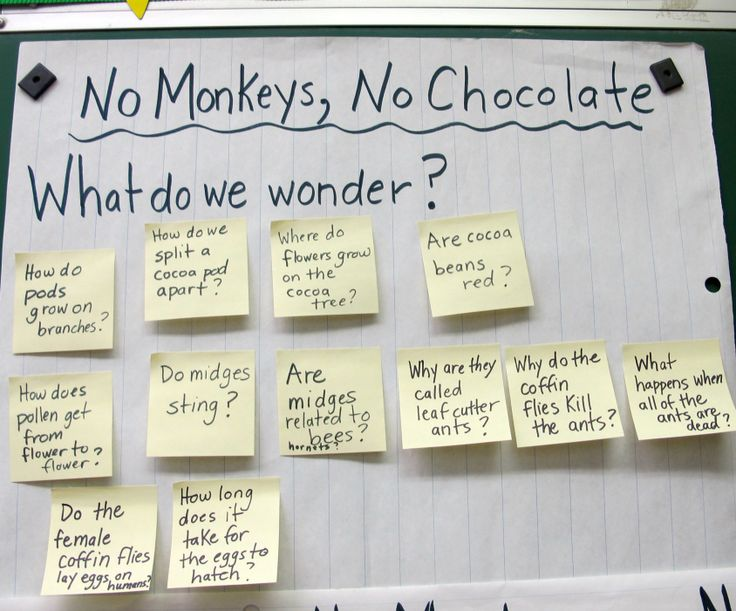 Dedicated Gr 2/3/4 teacher Carrie Gelson develops a read-aloud of No Monkeys, No Chocolate into a multi-facted lesson.