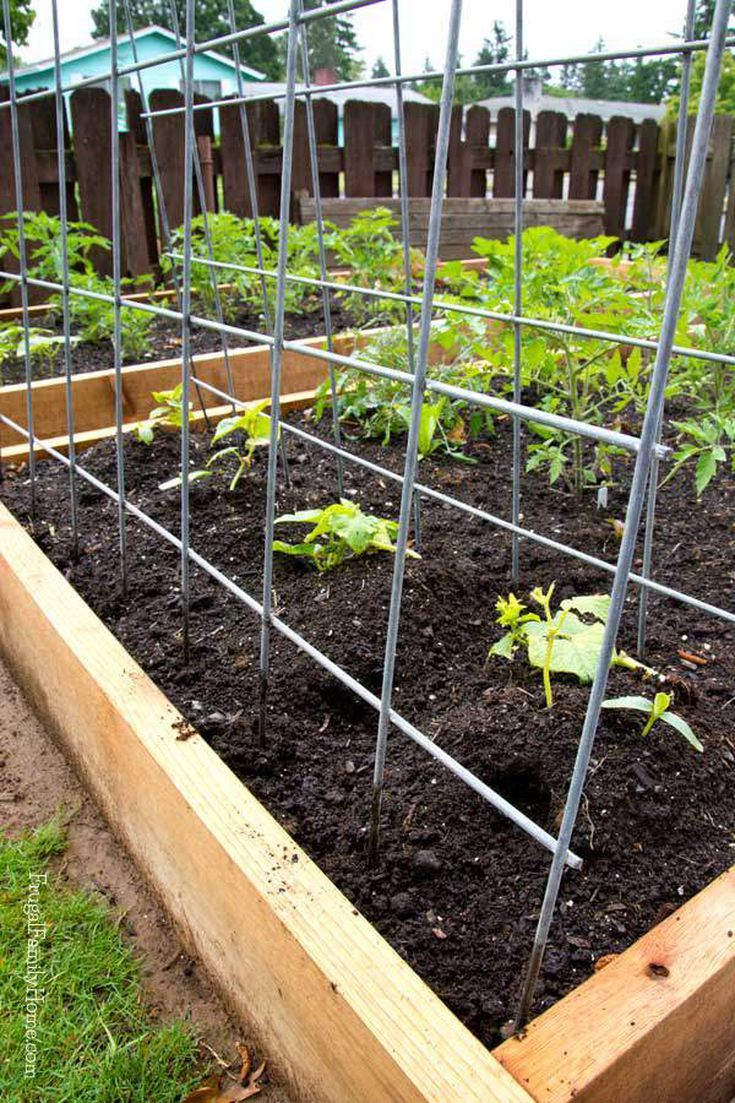 diy garden trellis fence