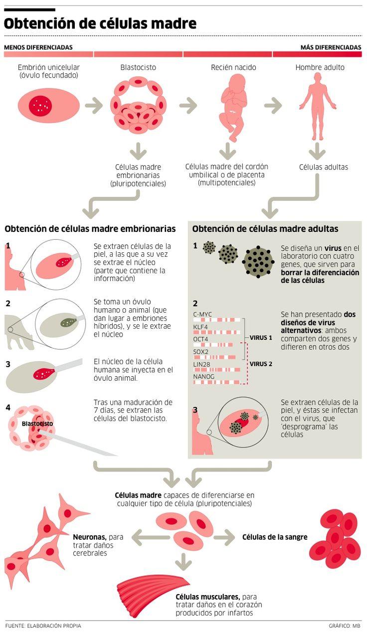 Obtención de células madre