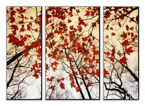 Bare Branches and Red Maple Leaves Growing Alongside the Highway Mount Art Set by Raymond Gehman at Art.com
