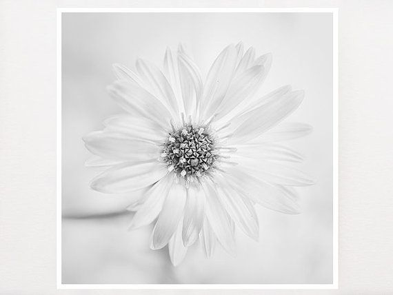 Flower Photography  Still Life Photography by GreenGooseGallery, €14.00