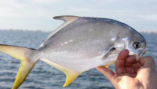 17 best images about saltwater fishing on pinterest for Florida pompano fish