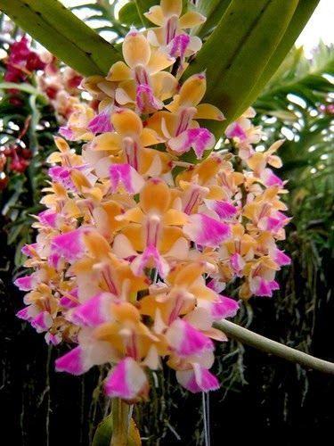 Gestaltungsideen Durch Orchiden. Die Besten 25+ Sonnenblumen Ideen