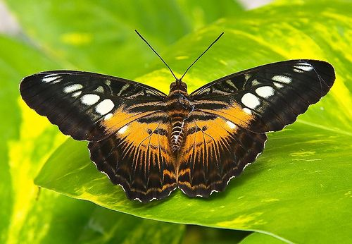 126 Best Images About Butterflies