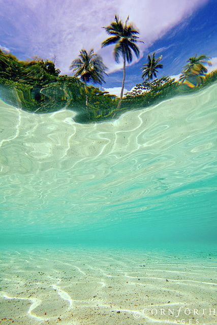 Batbitim Palm Tree Reflection 1 | Flickr ~ Indonesia, Papua, Raja Ampat, Misool Island,