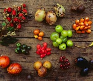 Bush Tucker Gardening is a great way to introduce more diversity and native species into your diet and home garden. This course will get you started.