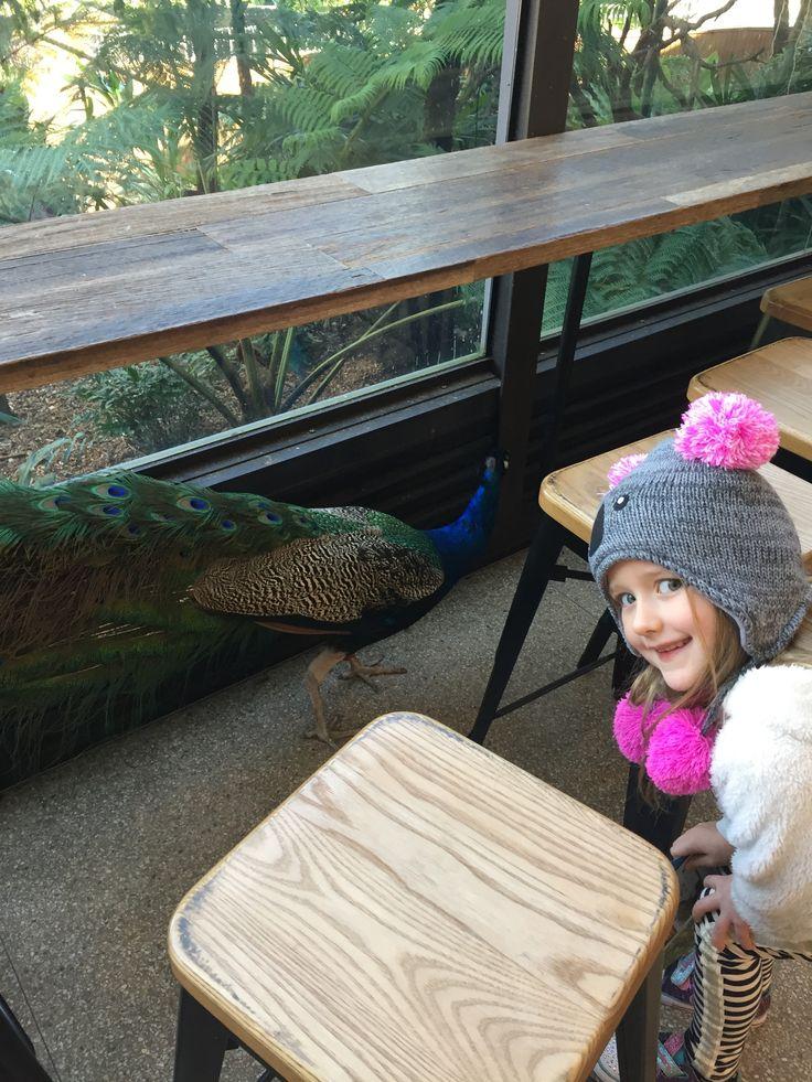 SibellaCK at Taronga Zoo Sydney