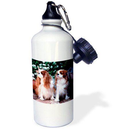 3dRose Two Blenheim Cavalier King Spaniel, Sports Water Bottle, 21oz