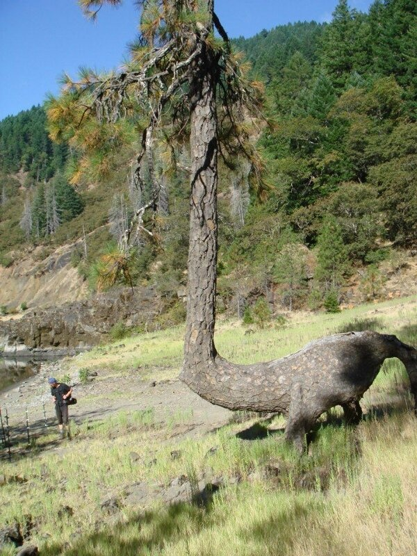 Weird tree that looks like an animal...