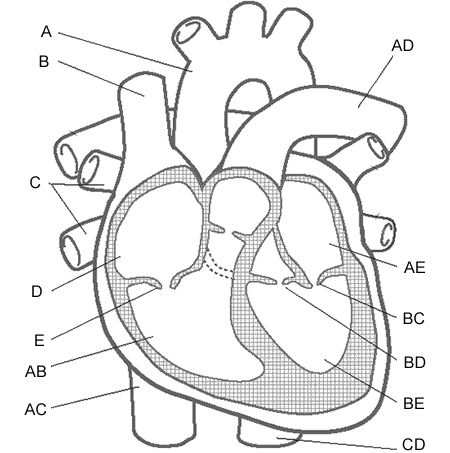 exercise 6 cardiovascular physiology worksheet †human performance group, biomedical systems lab, school of electrical  of  graded exercise, with a slope of approximately 5-6 in normal and athletic  subjects  rate during exercise is fundamental to the study of exercise  physiology.