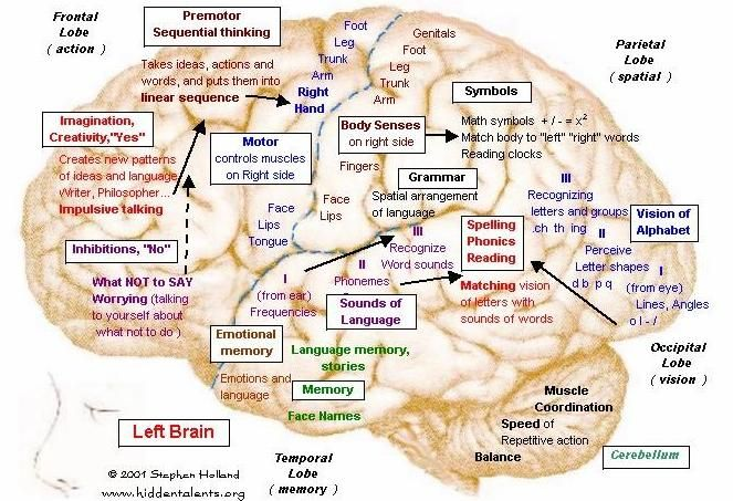 Human Brain Functions | http://hiddentalents.org/brain/jpg/b-left.jpg