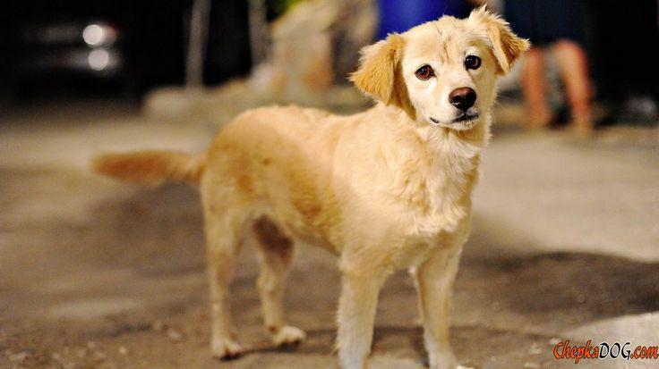 mittlere hunderassen mit bild: Breeds Medium, Small Dogs, Dogs Breeds, Medium Size, Tamaño Mediano, Size Photos, Dog Breeds, Big Dogs, Canes