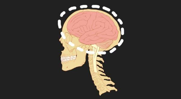 Criptomnesia Cuando Tu Cerebro Plagia A Otros O A Ti Mismo Sin Darse Cuenta Cerebro Humano Cerebro Funciones Del Cerebro Humano