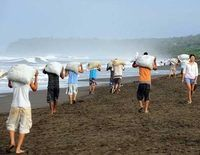 Costa Rica- Stop Harvesting Endangered Turtle Eggs