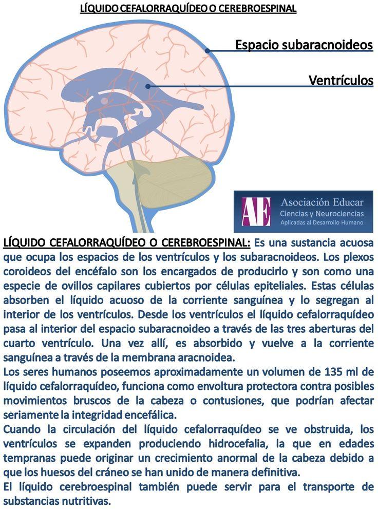 Líquido cefalorraquídeo o cerebroespinal. - Asociación Educar - Ciencias y Neurociencias aplicadas al Desarrollo Humano - www.asociacioneducar.com