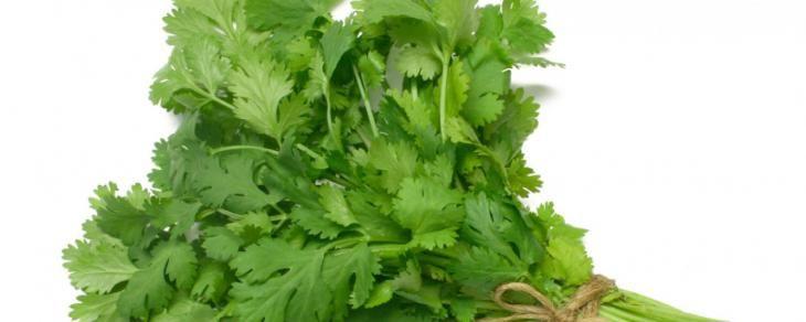 Salsinha e cebolinha: a dupla de temperos ideal para sua saúde!