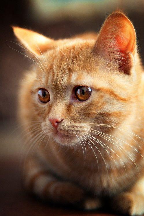 Samuel's cat, Cleo, is an orange tabby.