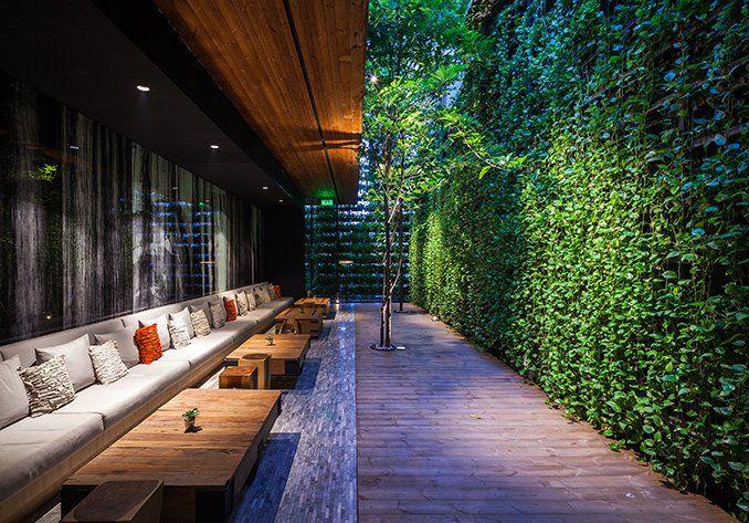 Under the Ficus Shade | Bangkok, Thailand | TROP -