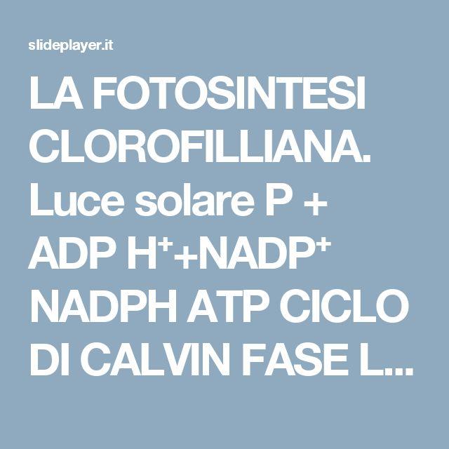 LA FOTOSINTESI CLOROFILLIANA. Luce solare P + ADP H⁺+NADP⁺ NADPH ATP CICLO DI CALVIN FASE LUMINOSA (nella membrana del tilacoide) FASE OSCURA (nello stroma) -  ppt scaricare
