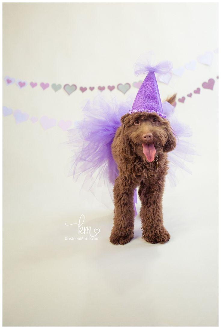 Dog Birthday Cakes Indianapolis
