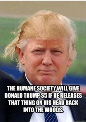 Donald Trump Jokes   Kappit