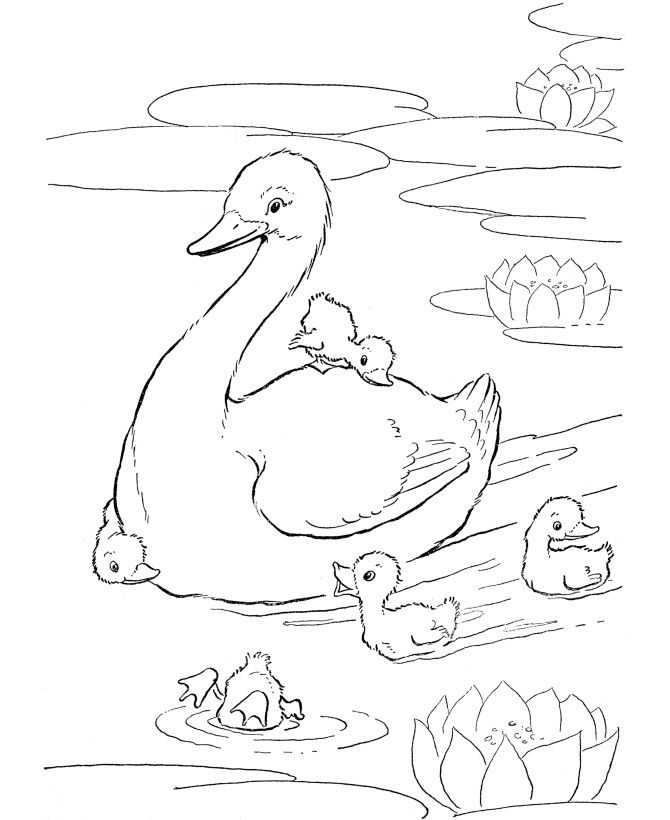 Farm animal coloring page | Ducks in the pond