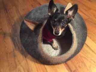 Pets bed / dog bed dog cave small dog house by AgnesFelt