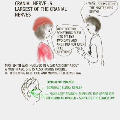 Clinical resource...cranial nerves