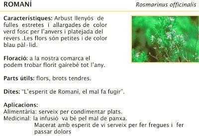 Sant Ponç. Herbes remeieres. Plantes Medicinals. Romaní