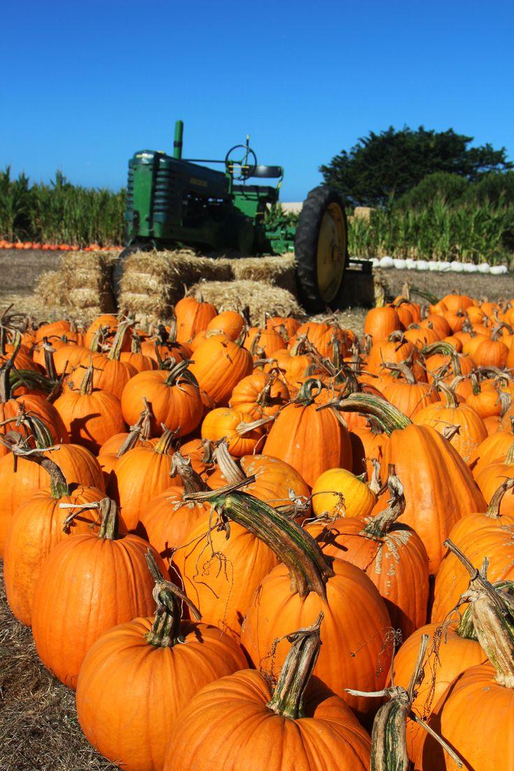 5 Reasons to Visit San Mateo County/Silicon Valley this Fall! #fall #pumpkins #pumpkineverything #sanmateocounty #halfmoonbay #playbythebay #fallseason