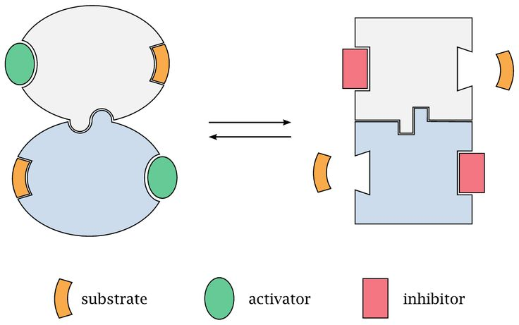 How allosteric regulation works