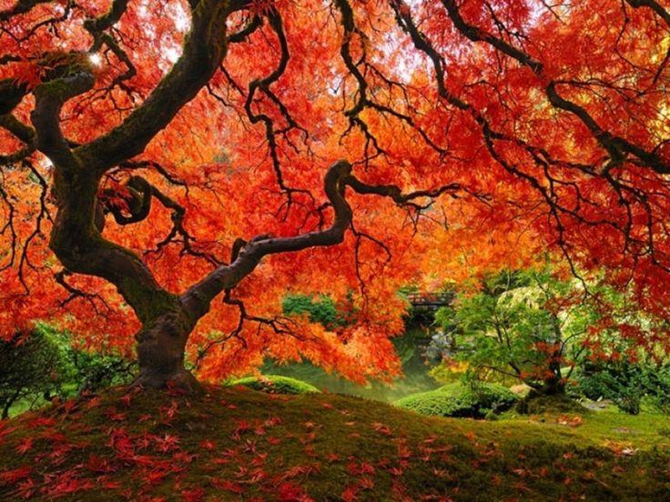 Ha ilyen fa állna a kertedben... | Hobbikert.hu