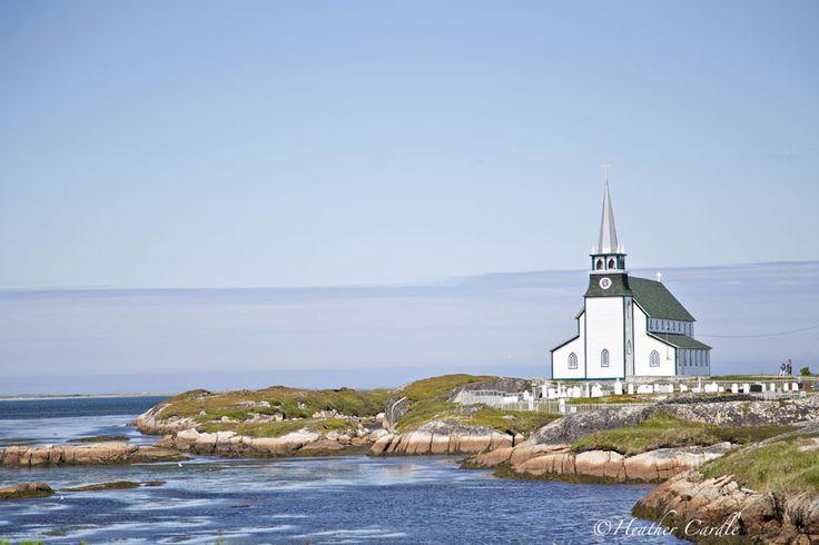 Newfoundland ♡