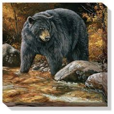 "Streamside (Black Bear)"""" Wrapped Canvas Art"