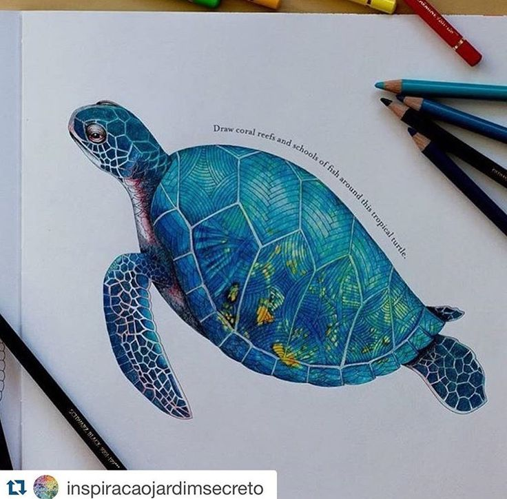 Colouring Adult Coloring Books Turtles Colored Pencil Drawings Pencils Art Photos Sharpie Designs