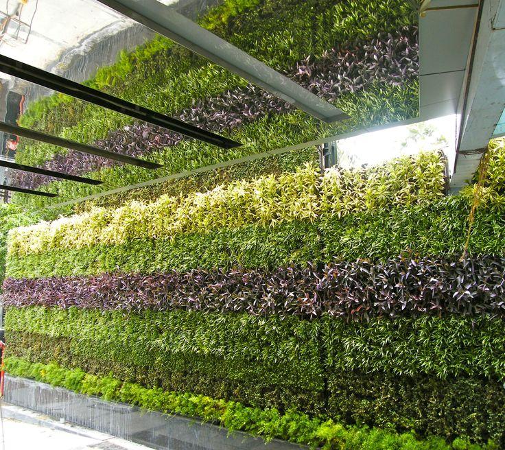 Beautiful Vertical Garden Ideas: Vertical Garden In Mumbai , India