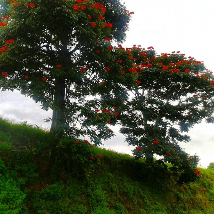 Flores en el arbol