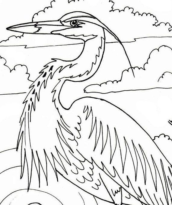 34 best blue heron images on Pinterest  Blue heron Herons and