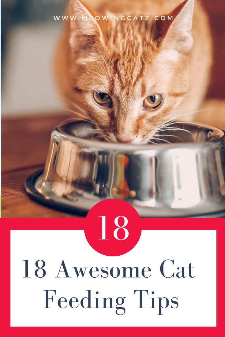 Pin On Awesome Cats Health Tips And Tricks