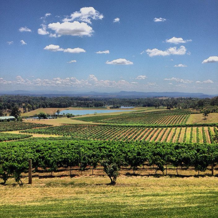 Audrey Wilkinson Vineyard was first planted in 1866 making it the oldest vineyard site in Pokolbin and one of the oldest in Australia. It has approx. 20 ha under vine, located in a naturally formed, north facing amphitheatre. Varieties planted on this site include Semillon, Chardonnay, Verdelho, Gewurztraminer, Shiraz, Malbec and Tempranillo. The old vines are almost 50 years old, with the majority of the Vineyard being 15 to 20 years old.