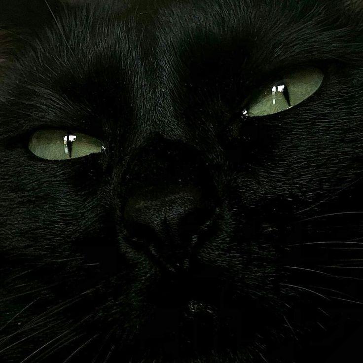 буддизме мрачные коты фото птенцов