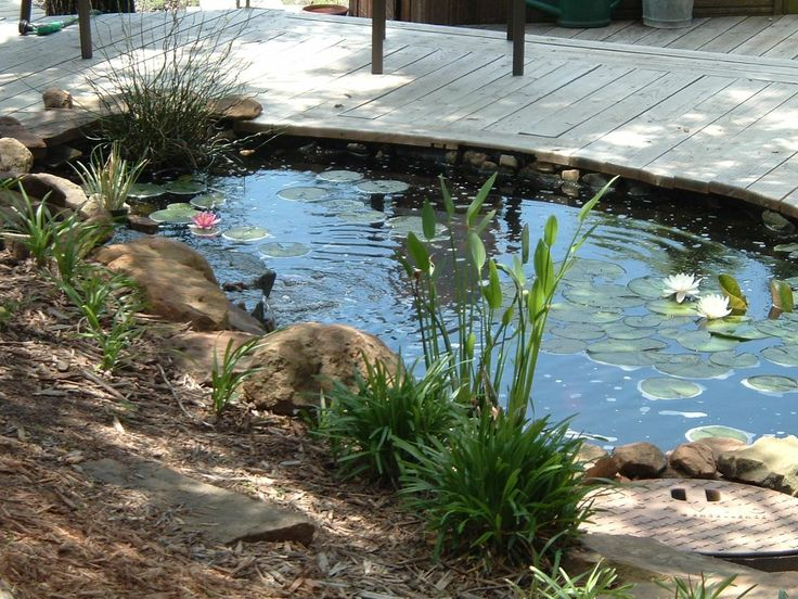 Pond deck water fun pinterest for Small deck pond