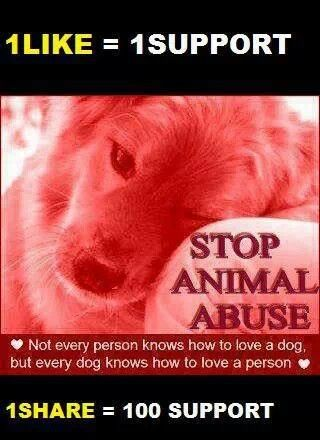Stop Animal Abuse I just gave 101 support yeah I'm on a roll