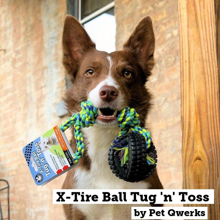 Who said Rope a Dope? Rub a Dub... Wrap me in your L-O-V-E❣❤️😘🐾🐶  . Introducing our new Jingle X-Tire Tug 'n Toss. Easy for dogs to pickup and fetch.  . 📸📷Featuring @sweet_sundance