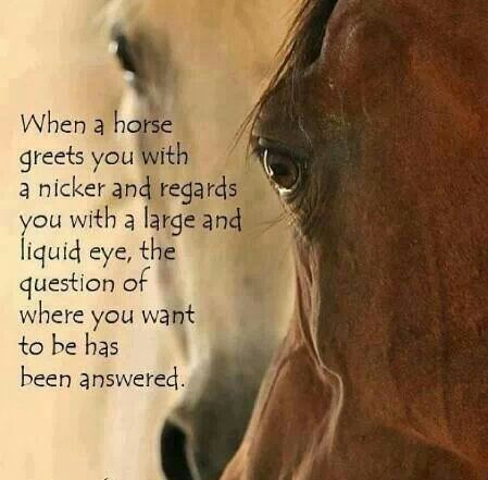 #horses #quotes
