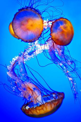 Jellyfish #ocean •• Whenever I see jellyfish I just want to touch them. Is that odd??