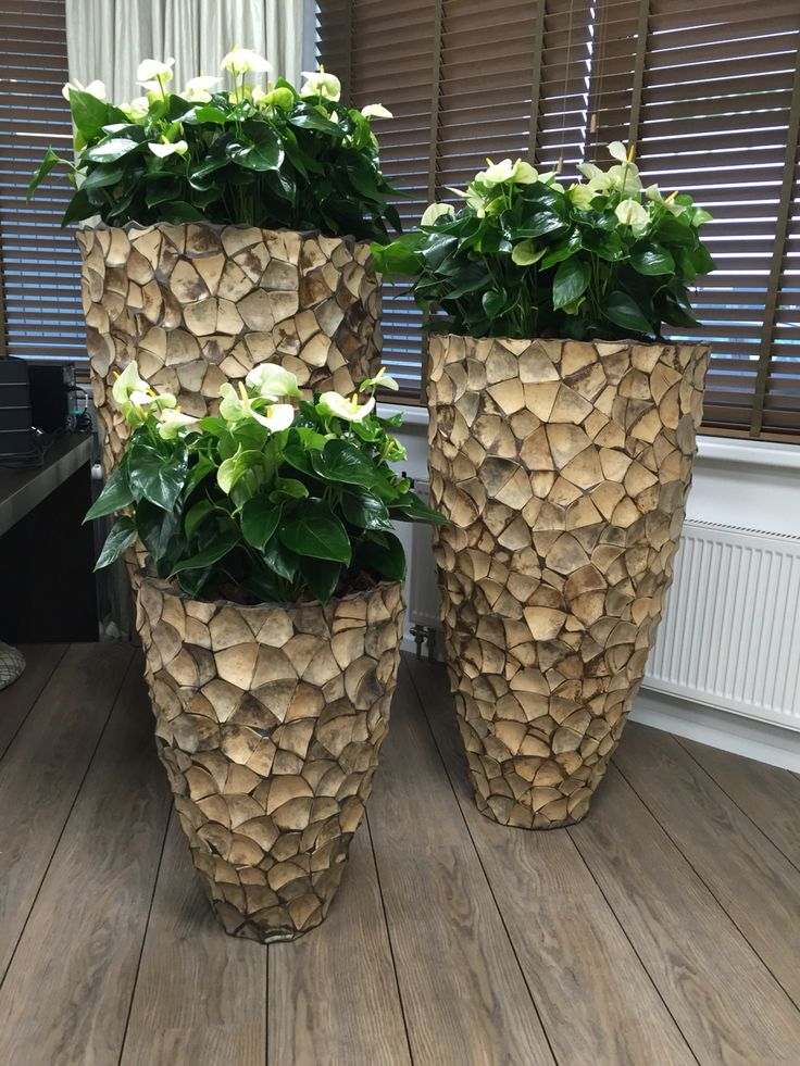 Plantenbakken gemaakt van Cocosnoten gevuld met wit bloeiende Anthurium