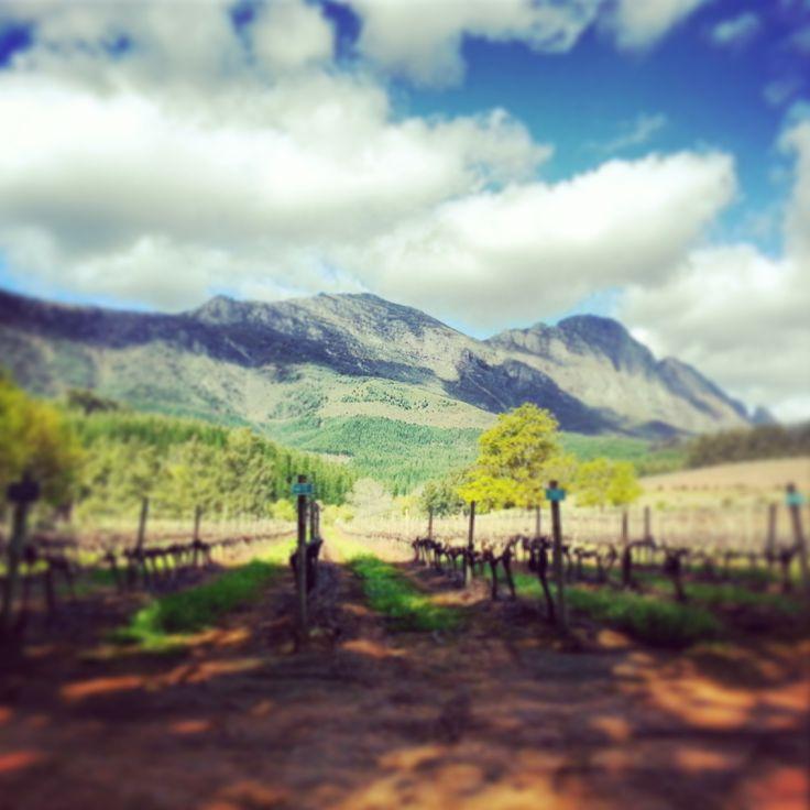 Stellenbosch Mountains and Wineries