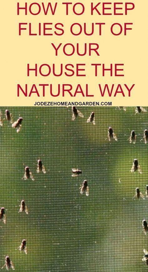 How To Get Rid Of Flies In Your House Naturally   Jodeze ...